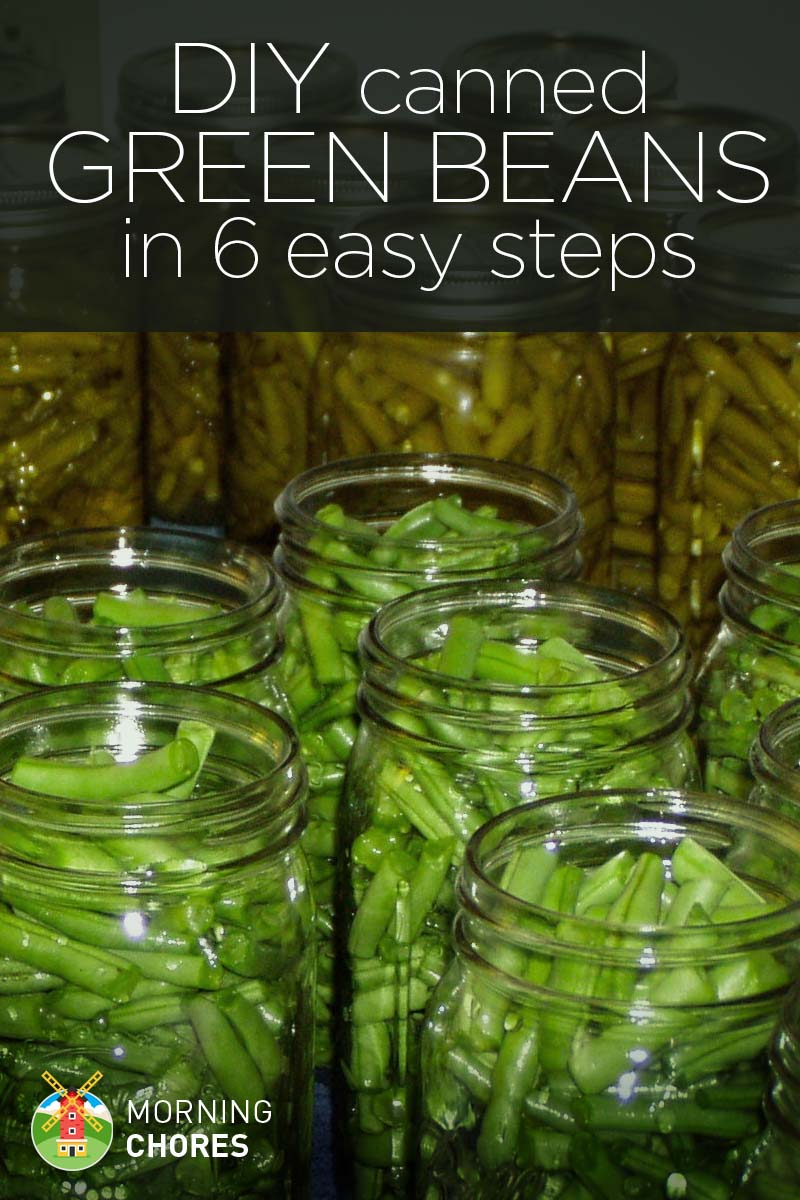 how to grow green beans at home