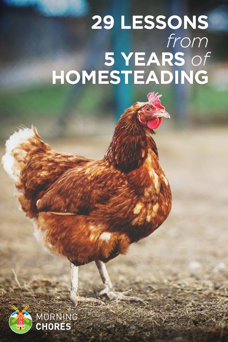 29 Lessons I've Learned from 5 Years of Homesteading on backyard farming ideas, backyard fruit trees ideas, backyard growing ideas, backyard crafts ideas, backyard art ideas, backyard construction ideas, backyard solar ideas, backyard games ideas, backyard camping ideas, backyard beekeeping ideas, backyard plants ideas, backyard home ideas, backyard food ideas, backyard greenhouse ideas, backyard water ideas, backyard exercise ideas, backyard family ideas, backyard business ideas, backyard spring ideas, backyard woodworking ideas,
