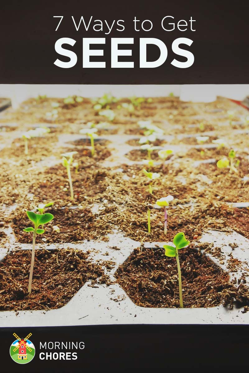 7 Ways to Get Seeds for Your Garden (almost free)