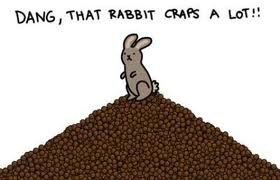 Rabbit poop