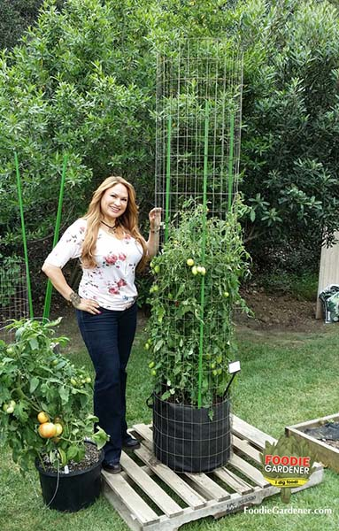 32 Diy Tomato Trellis Amp Cage Ideas For Healthy Tomatoes