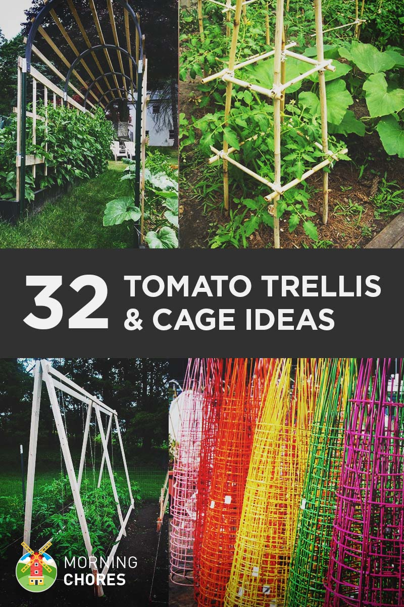32 DIY Tomato Trellis & Cage Ideas for Healthy Tomatoes