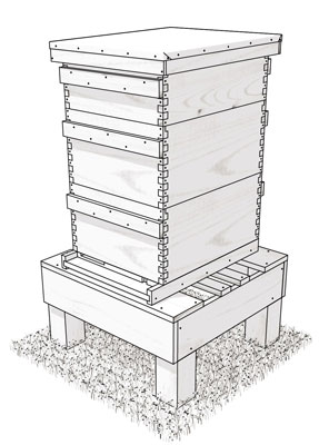 bee hive 8