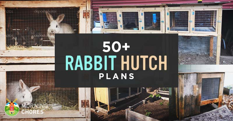 Plans To Build A Rabbit Hutch For Outside