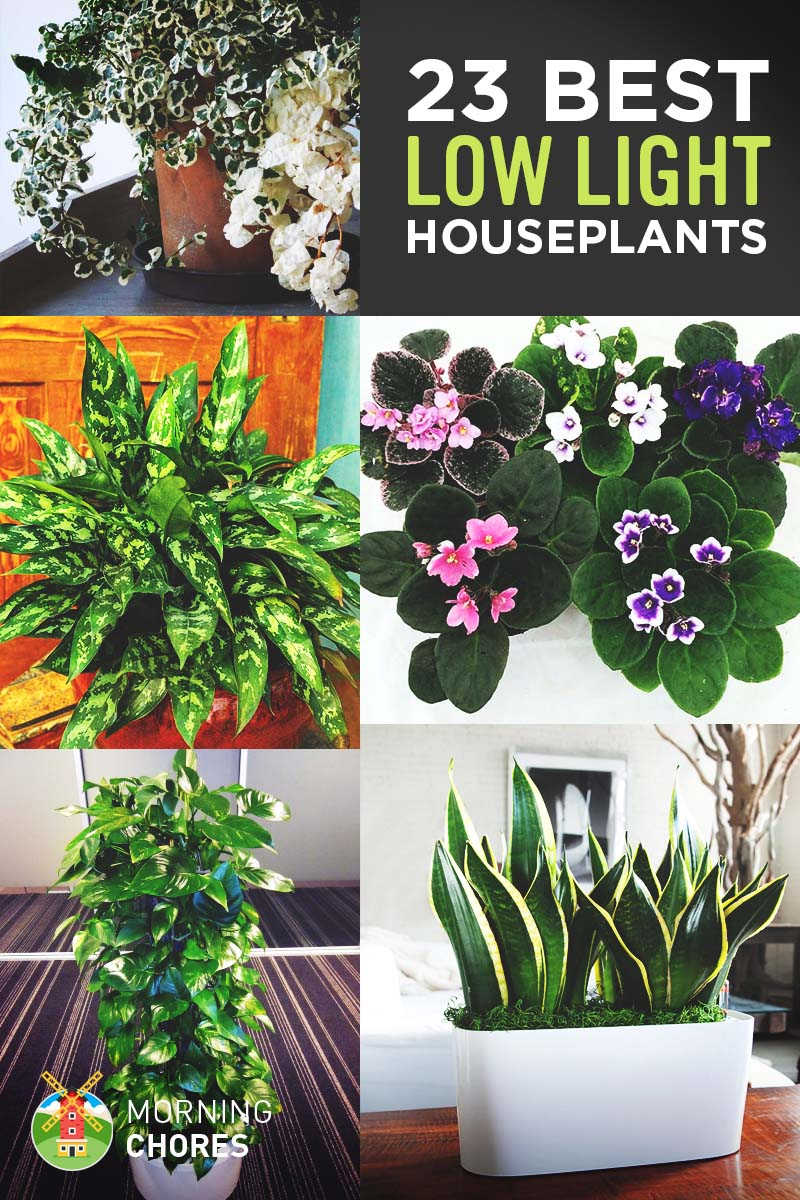 23 low light houseplants that are easy to maintain even if for Easy to keep indoor plants