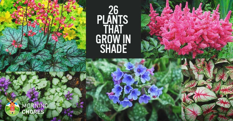 25 gorgeous plants that grow in shaded area in your garden mightylinksfo