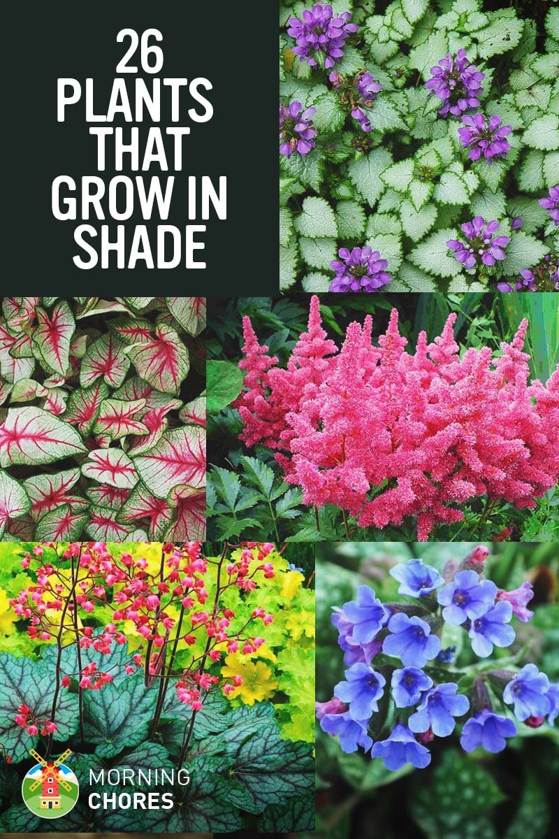 25 gorgeous plants that grow in shaded area in your garden 25 gorgeous shade tolerant plants that will bring your shaded garden areas to life izmirmasajfo