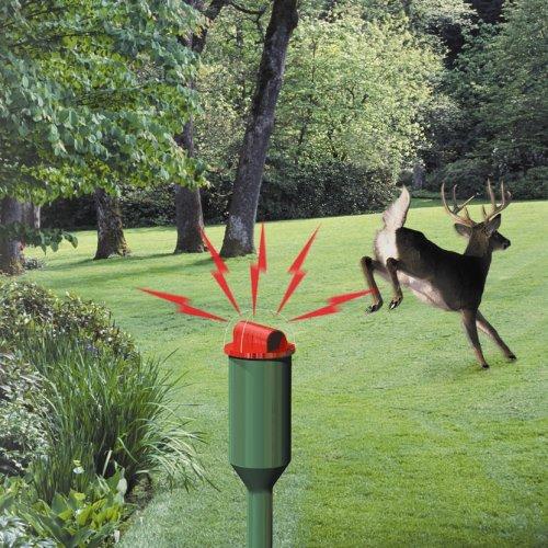 Deer Repellent 21 Ways To Keep Deer Out Of Your Garden Humanely