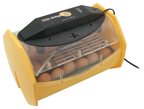 5 Best Egg Incubator for Chicken Eggs with Automatic