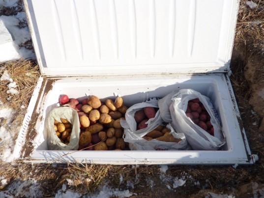 Freezer Root Cellar