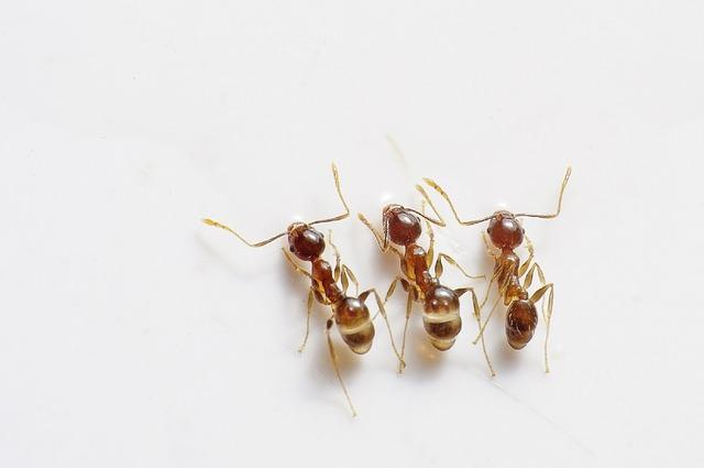 ants-498731_640