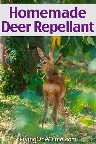 Deer in the garden.