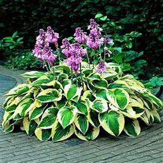 Purple Azaleas Landscaping