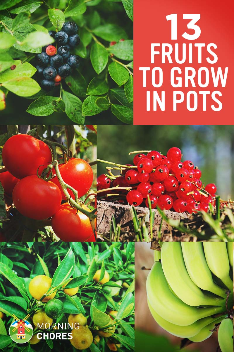 Grow A Garden In Pots 13 best fruits and berries you can easily grow in a container garden workwithnaturefo