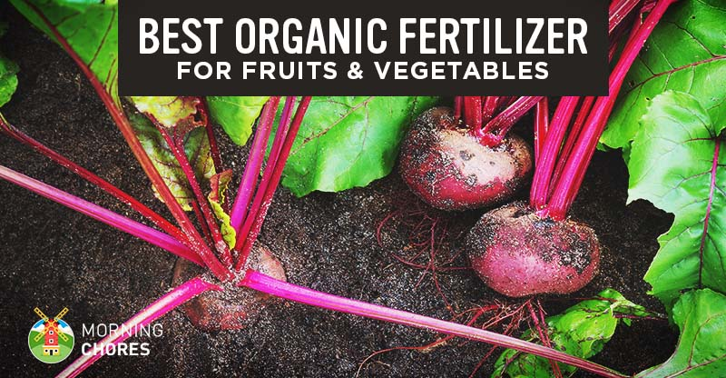 Best Organic Plant Food For Vegetables