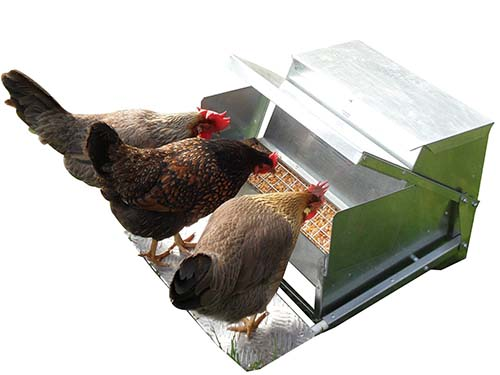 dp com supplies precision wood amazon feeder pet treadle x chicken