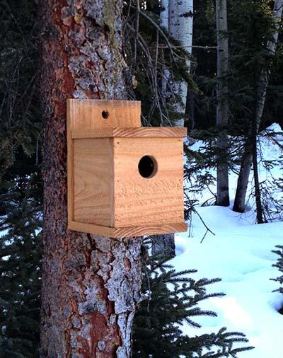 1-dollar-birdhouse