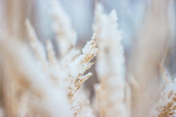 frosty-1149474_640