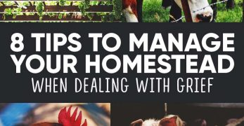 8 Tips to Manage Your Homestead When Dealing with Grief