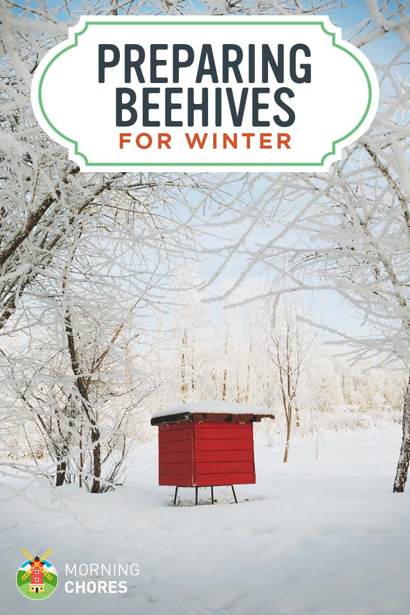 How to Prepare Beehives to Stay Alive in the Winter