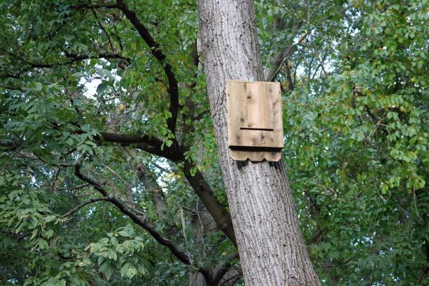 37 Free DIY Bat House Plans that Will Attract the Natural Pest ...