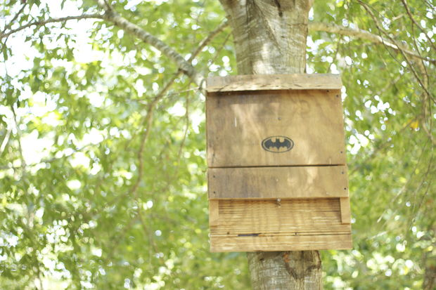37 Free DIY Bat House Plans that Will Attract the Natural Pest ... Can A Bat Be Added To House on