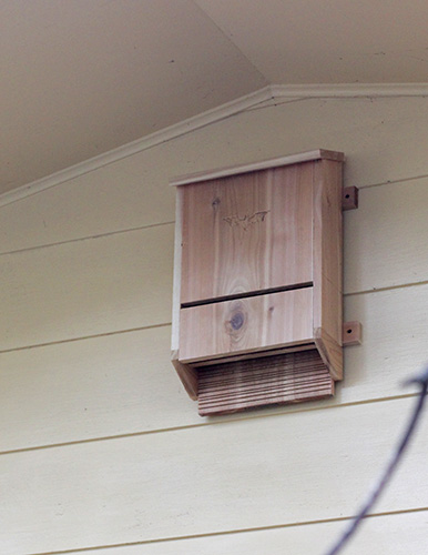 Nananananananana Bat Box