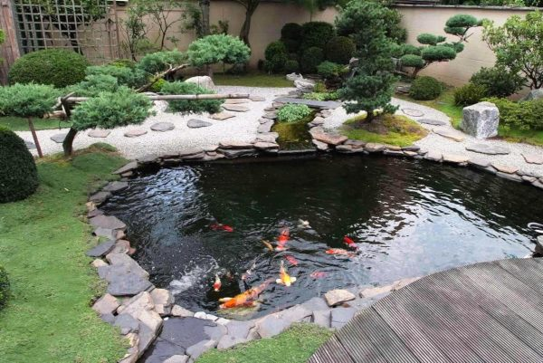 Backyard fish farming how to raise fish for food or for Japanese koi pond garden design