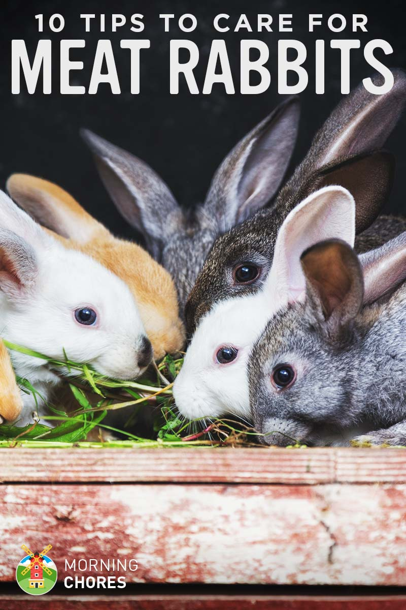 pictures How to Save Money on Rabbit Care