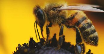8 Things That Are Killing the Bees and How to Save Them