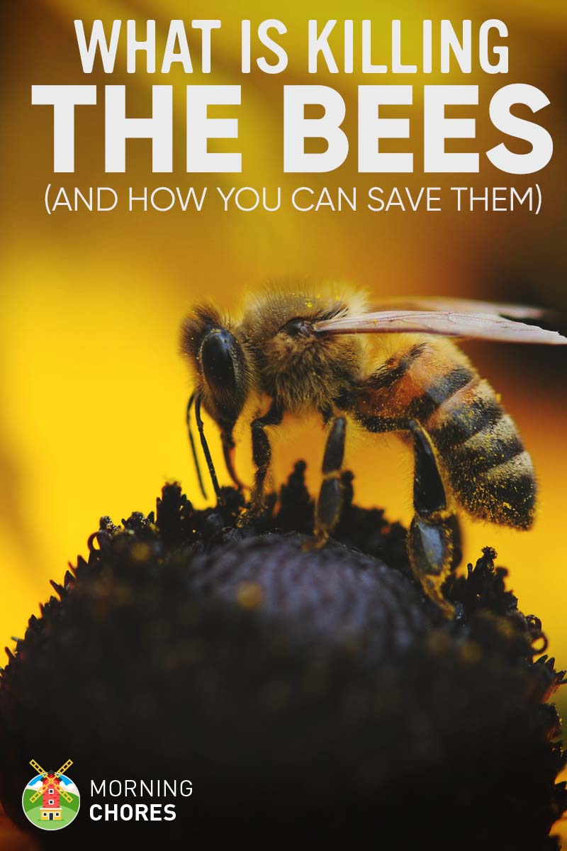 Can I Raise Bees In My Backyard 8 things that are killing the bees (and how can you save them)