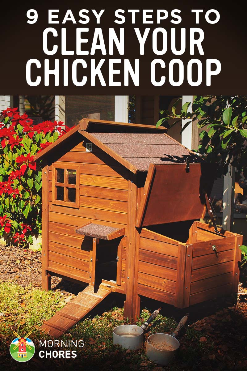 How to Clean Your Chicken Coop   Run  9 Tips to Do It Right 12a0dbe6f7b