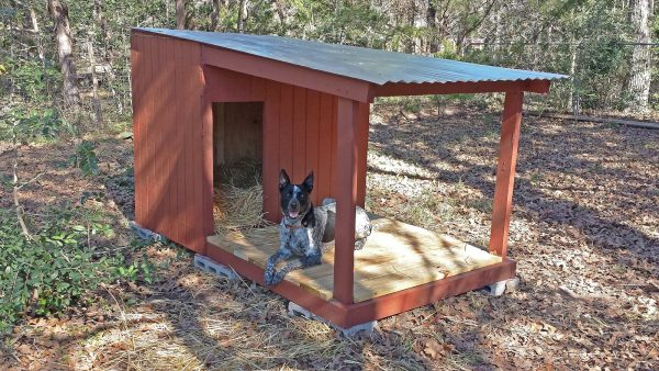 Outdoor Cat Or Dog Houses