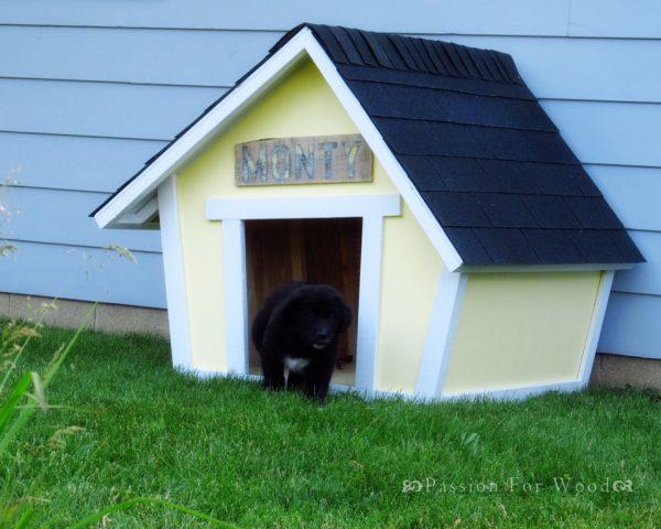 Crooked Dog House