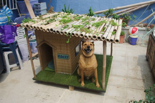 Do You Have A Beach Dog Well If Live Close To The Water Or Just That Loves Going On Vacation With Then Ll Probably Love This House