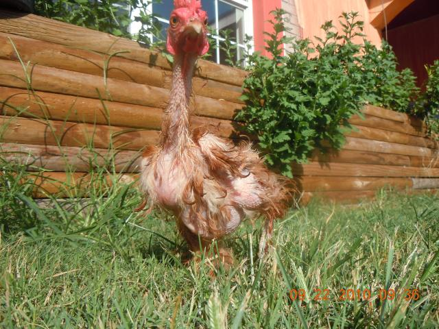 Photo by Backyard Chickens