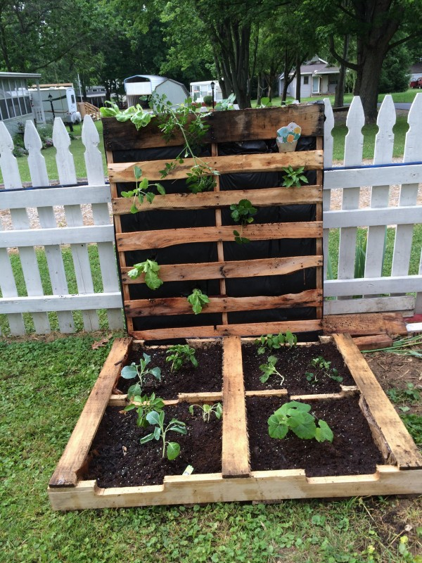 this pallet garden has a 2 for 1 option with it it starts as a horizontal above ground bed that you simply fill with dirt and then plant in it - Pallet Garden Bed
