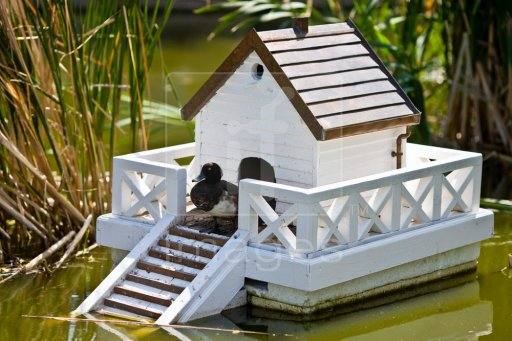 37 free diy duck house coop plans ideas that you can easily build this is a gorgeous duck house im sure you could build it to float or stay on land solutioingenieria Choice Image