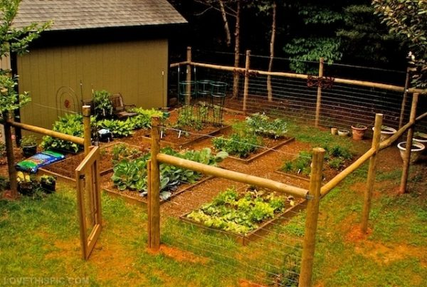Via Brit Co This Is Another Design For A Vegetable Garden Fence