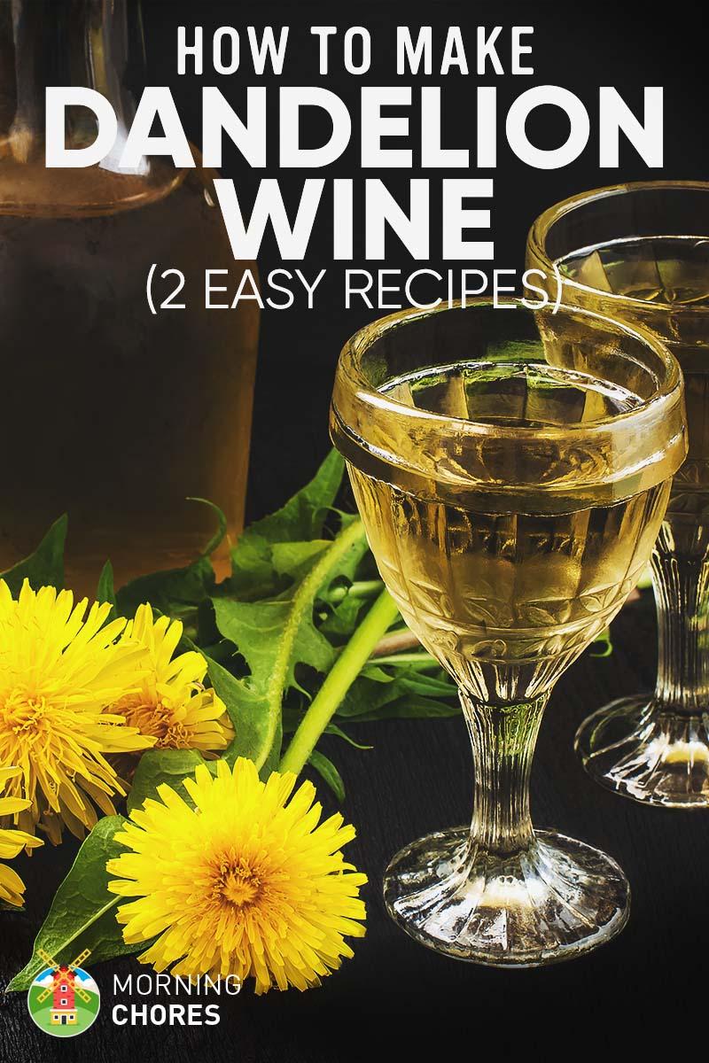 Wine from dandelions. Recipe for making homemade wine from dandelion flowers 63