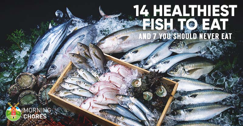 14 healthiest best fish to eat and 7 to absolutely for Safest fish to eat 2017