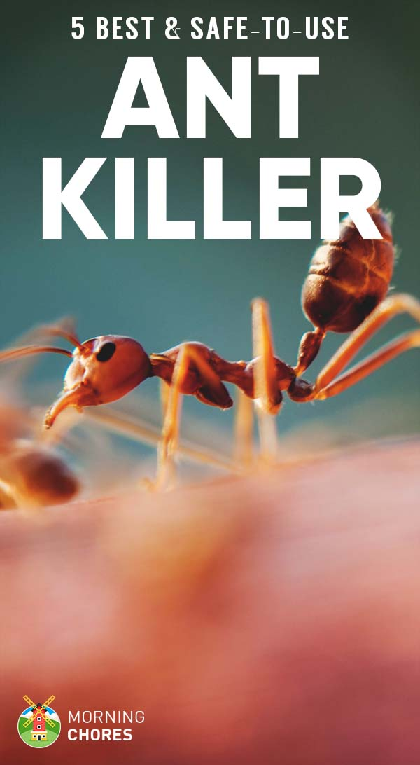 5 Best Outdoor & Indoor Ant Killers That Are Safe to Use