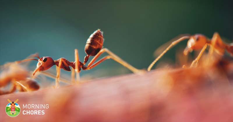 ant b gon killer ant liquid