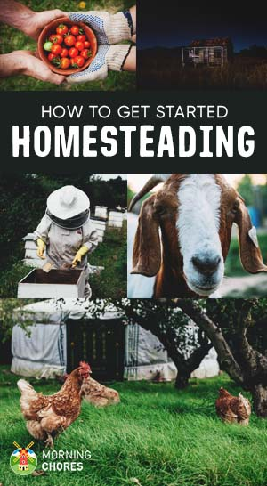 Homesteading 101 what is it and the essential steps to for How to start homesteading today