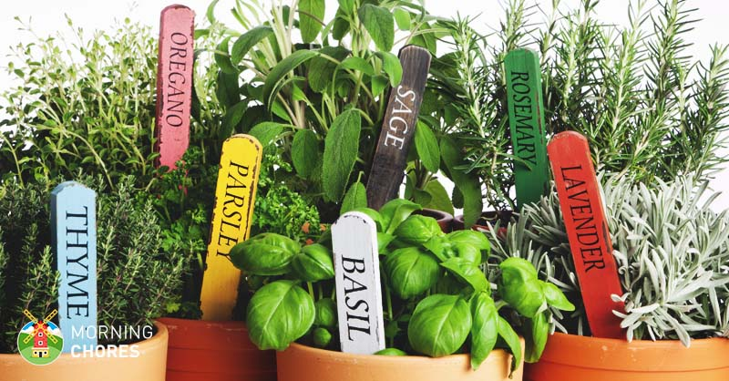 3 easy steps to growing herbs indoors and 5 herb garden inspiration workwithnaturefo