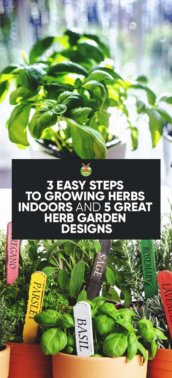 3 easy steps to growing herbs indoors and 5 great herb - Easiest herbs to grow indoors ...