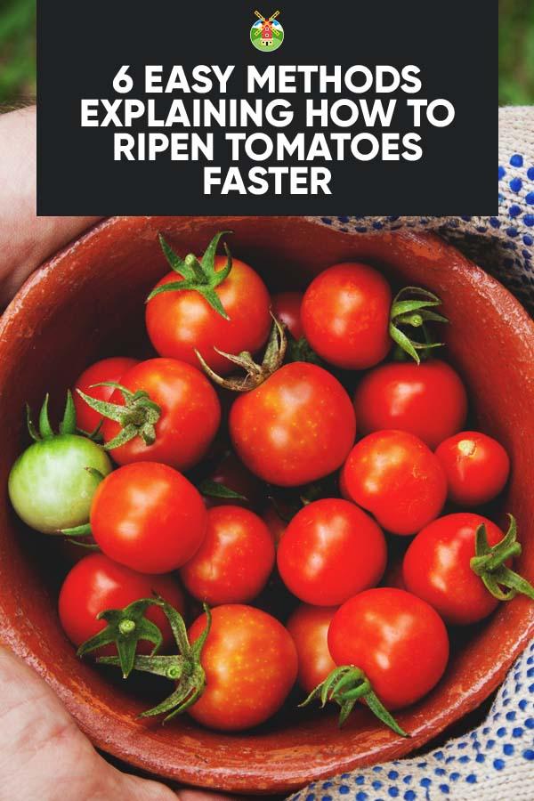 6 easy methods explaining how to ripen tomatoes faster. Black Bedroom Furniture Sets. Home Design Ideas