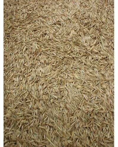 DC Earth 5LBS Creeping Red Fescue Grass Seed
