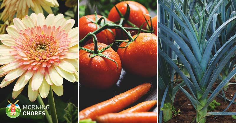 45 Best Greenhouse Plants To Make The Most Out Of Your Space