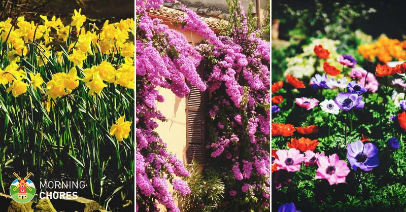 56 beautiful summer flowers that will transform any exterior mightylinksfo